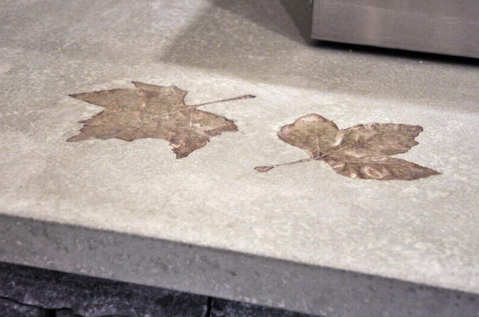 leafs embedded in concrete countertops