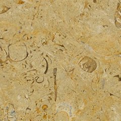 gold limestone tile with fossils embedded in surface