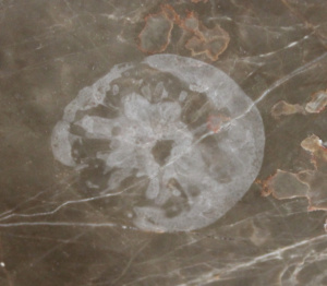 Etch Mark on Marble Countertop